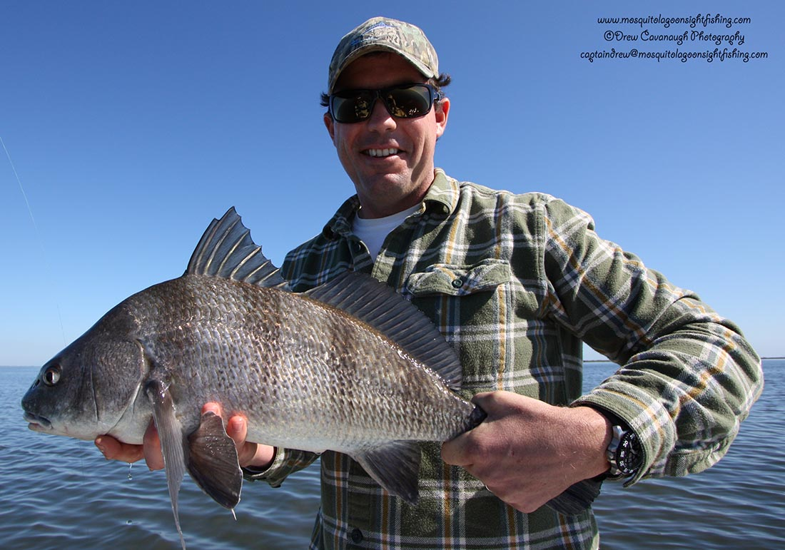 Mosquito lagoon black drum indian river black drum for Indian river florida fishing